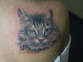 тату кот
