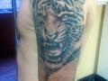 тату тигр на плече
