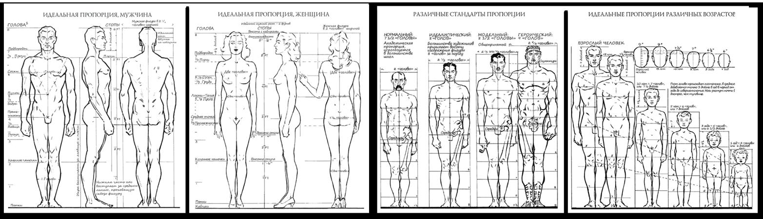 пропорции тела человека для понимания размера татуировки
